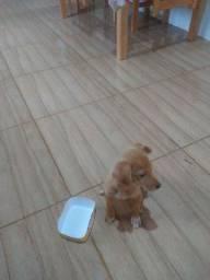 Cachorrinha doação