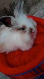 Coelha de raça