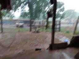 Procuro sítio ou fazenda para arrendar na região de Catanduva