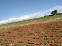 10 alqueires p lavoura, 700 sacas de soja o alqueire regiao londrina