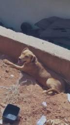 Título do anúncio: Doaçao de cachorro