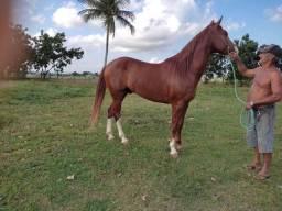 Cavalo a venda