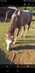 Égua muito boa, quarto de milha com crioulo