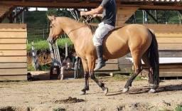 Título do anúncio: Égua com potra ao pé