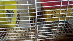 Vendo 2 hamsters já com a gaiola completa