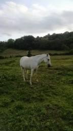 Cavalo Russo