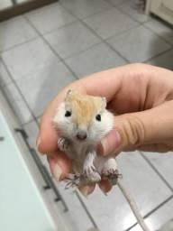 Esquilinhos da Mongólia
