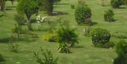 Terreno em cemitério Parque da Colina - Niteroi