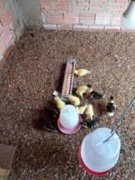 Vende-se patos