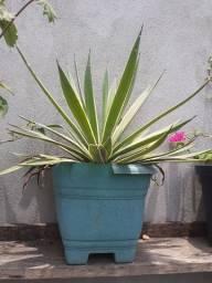 Linda planta apenas 20 reais