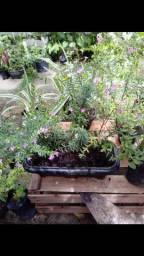 Mudas de Plantas, Flores e adubo