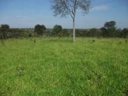 124C/Fazenda espetacular de 600 ha ótima para pecuária