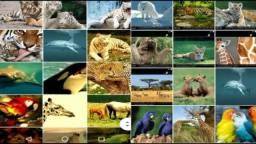Vídeo aula aquário grátis