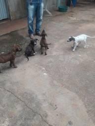 Cachorro doação responsavel