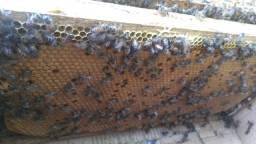 Título do anúncio: Colmeia abelhas apis (núcleo)