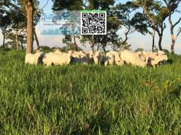 Fazenda de Pecaria há 4.5 km da BR 070