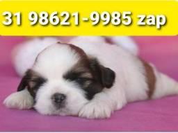 Título do anúncio: Filhotes Cães Alto Padrão BH Shihtzu Poodle Basset Lhasa Maltês Yorkshire