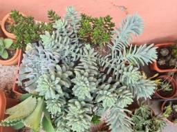 Planta para seu jardim