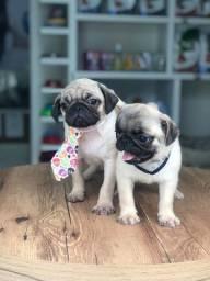 Título do anúncio: Filhotinhos Pug disponíveis! Já vacinados