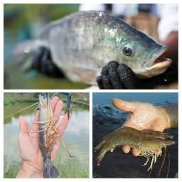 Título do anúncio: Consultoria técnica peixe e camarão(GO)