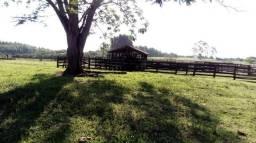 Fazenda 100 alqueires em casia dos coqueiros 7.000.000.00