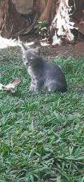 Doacao de gatinhos