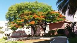 Apartamento à venda com 2 dormitórios em Vila assunção, Porto alegre cod:LU428840