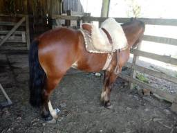 Cavalo colorado