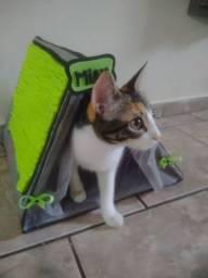 Casa gato + arranhador
