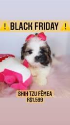 Black friday! Shih tzu fêmea belíssima! R$1.599