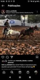 Cavalo direta pra vender