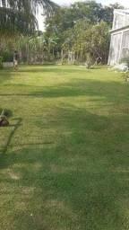 Serviço de corte de grama limpeza  de piscinas em geral