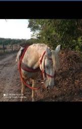 Vendo cavalo bom de lida