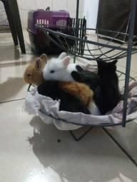 Vende-se lindos coelhos de raça