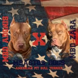 Mbd Aonis X Mbd Zara - American pit bull terrier