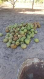 Vendo mil cocô maduro