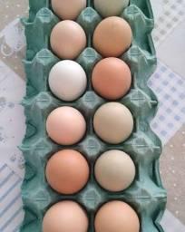 Ovos caipira do quintal