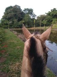 Cavalo mancinho