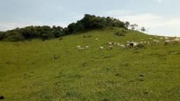 60 Alqueires fazenda ta com gado mas dá 40 Alq de soja