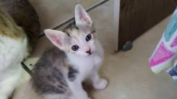 Gatinha filhote