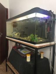 Aquario 228 litros completo