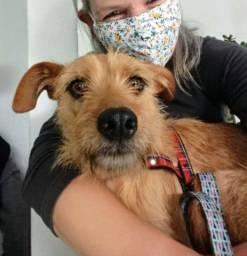 Doação de cadela castrada e vacinada