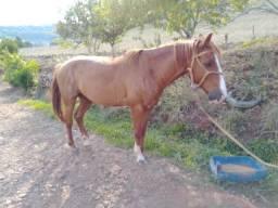 Cavalo domado