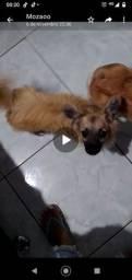 Doa-se cachorro porte pequeno