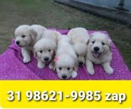 Título do anúncio: Canil Filhotes Cães em BH Golden Pastor Labrador Akita Boxer