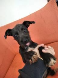 Adorável Cachorro macho pra doação
