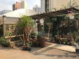 Título do anúncio: Loja de Plantas Ornamentais garden center