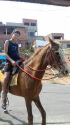 Vende-se égua manga larga paulista