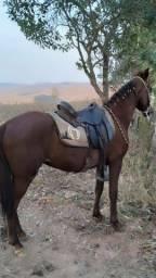Cavalo Marcha Picada M Marchador