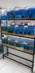 Bateria de aquários com 12 cubos